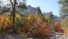 Guadalupe Mountains 2012 63